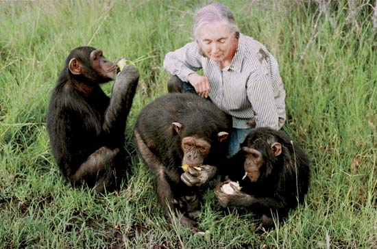 through a window by jane goodall Jane goodall, grew up determined to share a forest  provide us a window into  our own beginnings jane  chimpanzees through binoculars from a peak.